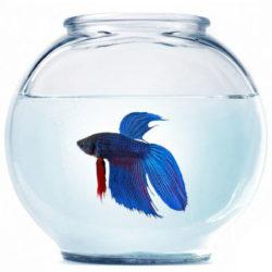 Аквариум на 5,5л с рыбкой петушок